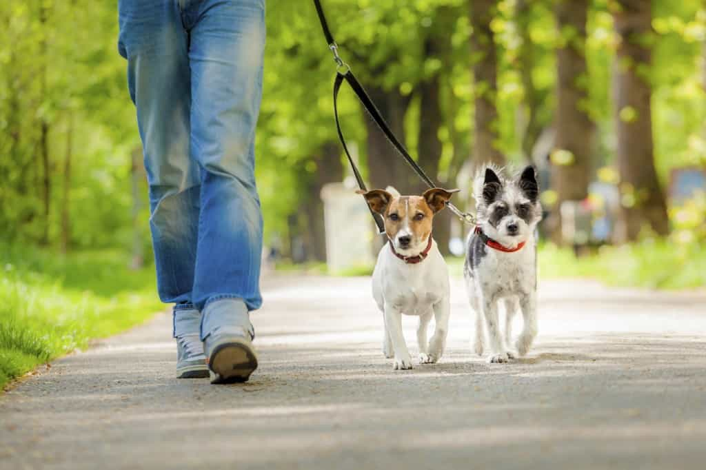 Dogs Going For A Walk iStock 000039819942 Medium 1024x682 - Lift Your Spirits up!