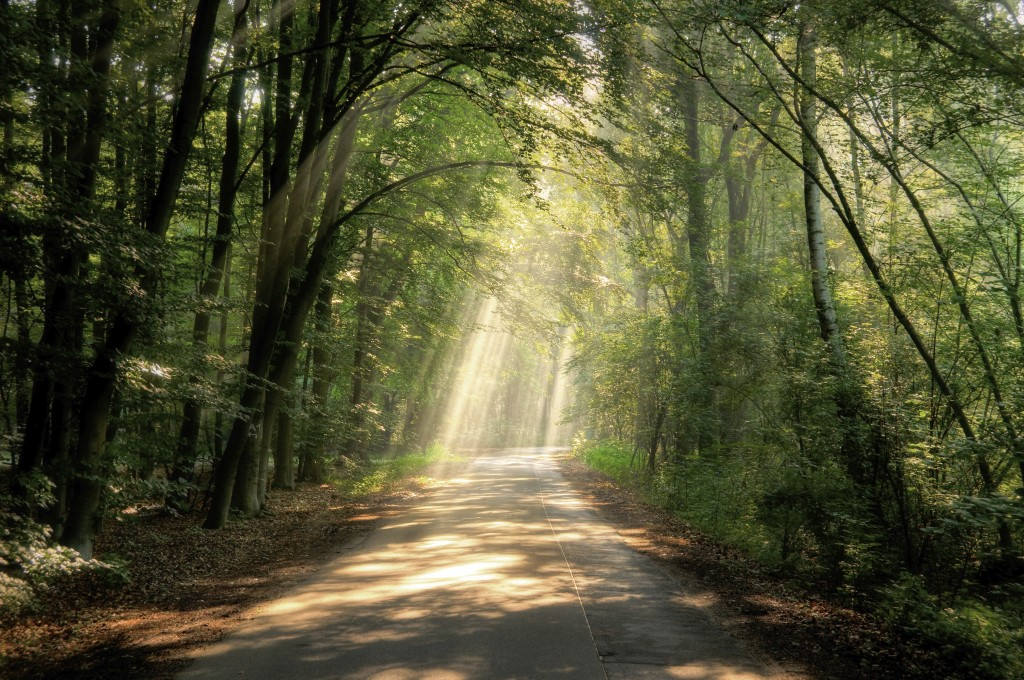 Forest Path -iStock_000010536800_Full